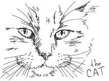 Gato dibujado mano Foto de archivo libre de regalías