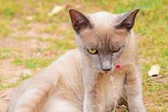 Gato difícil Imagen de archivo libre de regalías