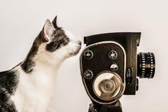 Gato-director con la cámara del vintage foto de archivo libre de regalías