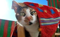 Gato disimulado imagen de archivo