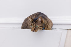 Gato disimulado en cesta de la ejecución fotografía de archivo