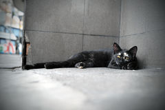 Gato disperso Foto de Stock Royalty Free