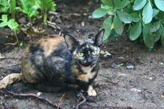 Gato disperso Imagem de Stock