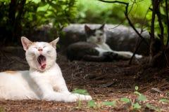 Gato disperso Foto de Stock