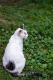 Gato disperso Fotografia de Stock