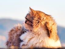 Gato disperso Foto de Stock Royalty Free