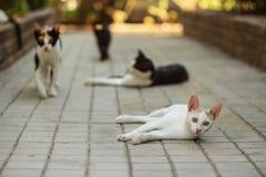 Gato disperso branco que coloca no pavimento concreto no recurso do hotel, ANSR fotos de stock