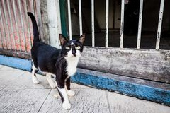 Gato disperso curioso na rua de Ásia imagem de stock