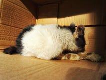 Gato disperso desabrigado 2 imagens de stock royalty free