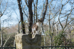 Gato disperso nas ruínas antigas 2 Imagens de Stock Royalty Free