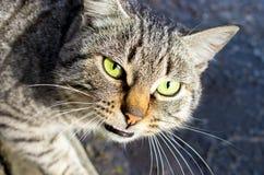 Gato disperso principal imagem de stock