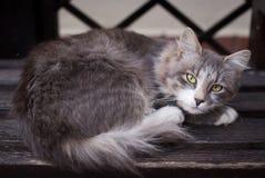 Gato disperso que encontra-se em um close-up do banco Fotos de Stock