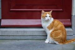 Gato disperso que senta-se na frente da porta vermelha imagens de stock royalty free
