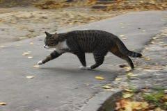 Gato disperso triste Cat On The Road bonito fotos de stock royalty free