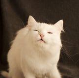 Gato divertido Fotografía de archivo