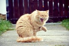 Gato divertido Foto de archivo