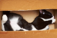 Gato divertido Imagenes de archivo