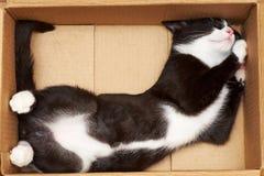 Gato divertido Foto de archivo libre de regalías