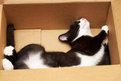 Gato divertido Fotos de archivo