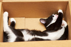 Gato divertido Fotos de archivo libres de regalías