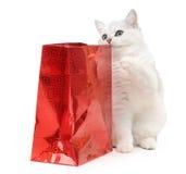 Gato divertido británico con un regalo Fotografía de archivo