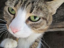 Gato divertido con los ojos verdes Imágenes de archivo libres de regalías