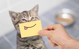 Gato divertido con sonrisa y la lengua en la cartulina que se sienta cerca de la comida foto de archivo libre de regalías