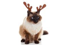 Gato divertido del animal doméstico del reno de Rudolph de la Navidad Imagen de archivo libre de regalías