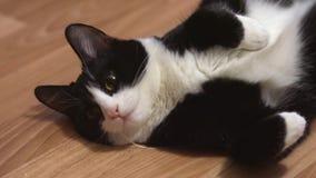 Gato divertido que descansa después de juego almacen de metraje de vídeo