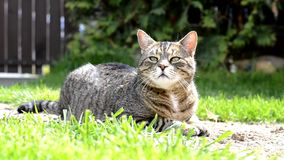 Gato divertido rayado lindo en el jardín almacen de video