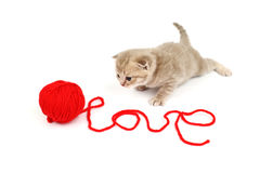 Gato do amor Imagem de Stock Royalty Free