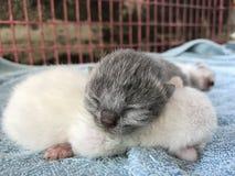 Gato do animal da vista Imagens de Stock Royalty Free
