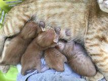 Gato do animal da vista Foto de Stock Royalty Free