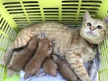 Gato do animal da vista Imagem de Stock Royalty Free