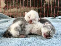 Gato do animal da vista Imagem de Stock