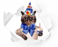 Gato do aniversário Imagens de Stock Royalty Free