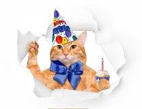 Gato do aniversário Fotografia de Stock Royalty Free