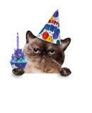Gato do aniversário Imagem de Stock Royalty Free