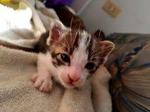 Gato do bebê imagem de stock