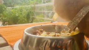 Gato do bebê que come os espaguetes e a comida de gato video estoque