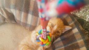 Gato do bebê que joga com um brinquedo do bebê do pêndulo video estoque