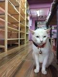 gato do bibliotecário Imagens de Stock