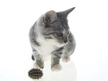 Gato do bichano foto de stock royalty free