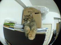 Gato do bichano por Fisheye Foto de Stock Royalty Free