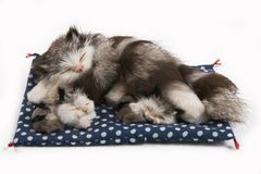 Gato do brinquedo com dois gatinhos Imagens de Stock Royalty Free