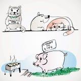 Gato do cão do porco Foto de Stock
