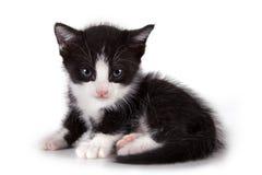 Gato do cachorrinho Fotografia de Stock
