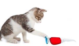 Gato do cachorrinho com vidros 3d Fotos de Stock