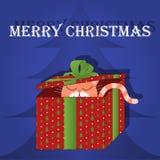 Gato do cartão do Feliz Natal na caixa Foto de Stock Royalty Free