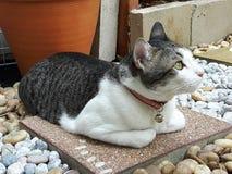 gato do cutie Imagens de Stock Royalty Free